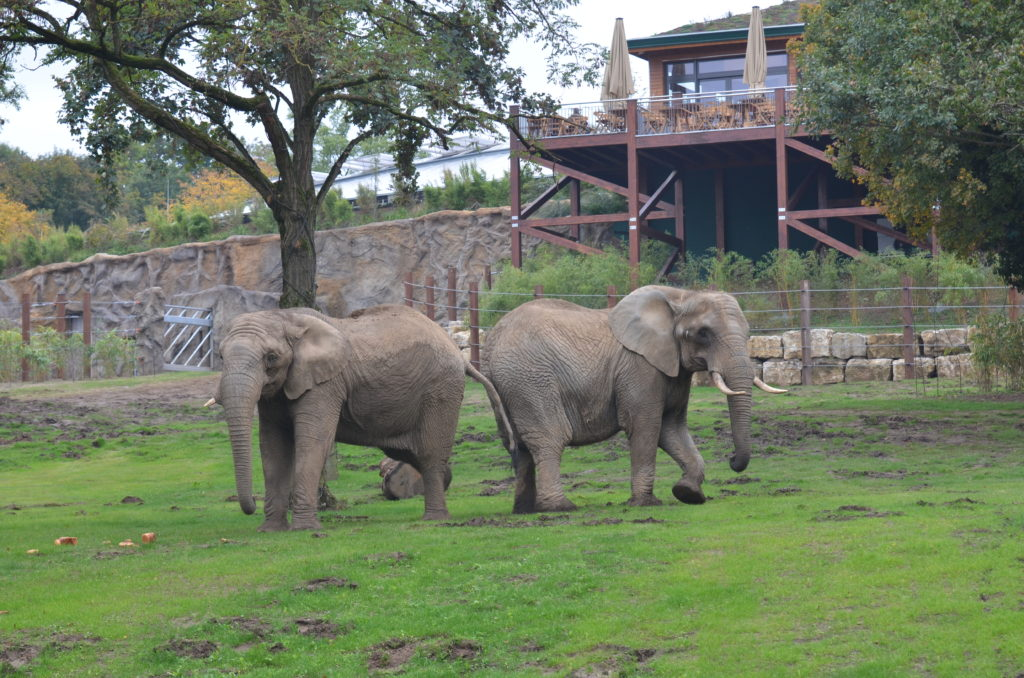 Opel-Zoo Kronberg_Elefanten
